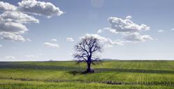 Con 4.886 productos tradicionales, Italia es líder en biodiversidad