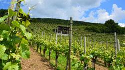Bajan las exportaciones españolas de vino y sube el precio medio