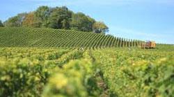 Il prezzo del vino spagnolo cresce in tre continenti