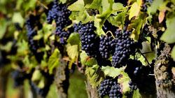 Spagna, le esportazioni di vino registrano il miglior primo semestre di sempre