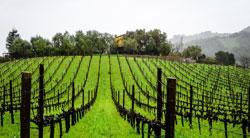 Spagna, crescono le esportazioni di vino nel 2017