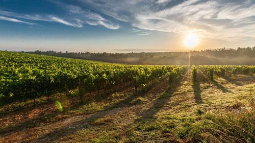 Italia y España, primeros exportadores mundiales de vino en 2019